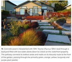 elfin thyme between concrete pavers