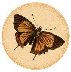 Orange-Butterfly-01 Digital Goodie free printable on threelittlekittens.com/blog