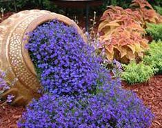 Blue lobelia, would like to plant these around the big tree in my front yard