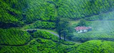 """Cinque idee per passare delle esperienze indimenticabili in Kerala, la """"Terra degli Dei"""": ammirare gli elefanti, visitare i templi induisti, rilassarsi con un massaggio ayurvedico e molto"""