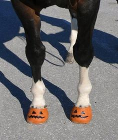 Pumpkin painted horse hooves!