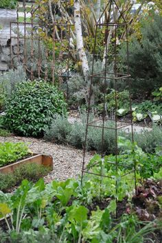 gardening ideas for beginners, vegetable gardening ideas backyard ideas images small garden ideas on a budget small backyard garden ideas large garden ideas small garden landscaping ideas Potager Garden, Garden Plants, Garden Landscaping, Landscaping Ideas, Backyard Ideas, Small Backyard Gardens, Small Gardens, Garden Ideas Large, Le Baobab