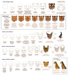 How To Draw Big Cats Part 2 by *TamberElla on deviantART