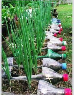 Gardening with bottles