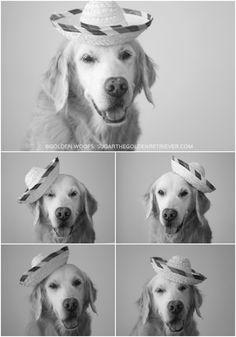 Black n White Photo: Sombrero Dog