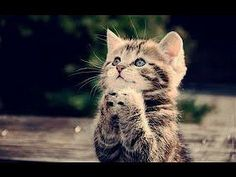 ▶ 20 Minutes of Funny Cats!!!! - YouTube