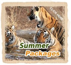 Ranthambore National Park is one of the well known wildlife destination situated in the Rajasthan, which is the state of India. It is said that there is always the most possibility to trace tiger form naked eye. The portal is also I think the best source to know about the national park.