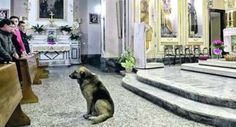 Tommy the dog has not missed a single mass in the small church in southern Italy where his mistress's funeral was held.  Muore la padrona, il cane torna in chiesa  Il dolore di Tommy, ogni giorno davanti all'altare del funerale. http://www.lefigaro.fr/international/2013/01/16/01003-20130116ARTFIG00385-le-chien-tommy-fidele-a-sa-maitresse-au-dela-de-la-mort.php
