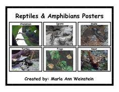 Reptiles & Amphibians Posters includes six posters that can be displayed or placed in a Science Center. These posters are GREAT for all ages!FYI: You can earn credits to use at various TPT stores by providing feedback for purchased products.  Please click the star at the top of the page to follow me if you would like notification when I post a new product.