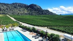 12 Incredible Wineries In The Okanagan You Need To Check Out This Summer www.narcity.com