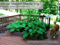 small container garden for deck - Google Search