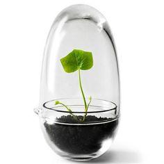 Grow odlingskupa - glas - Design House Stockholm