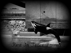 Rest In Peace Taima | by Shamufan88