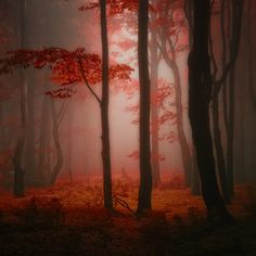 Forest and Trees by Janek Sedlar-