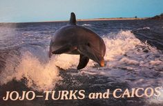 Read about JoJo the Dolphin and other wonderful things found only in the Turks & Caicos.