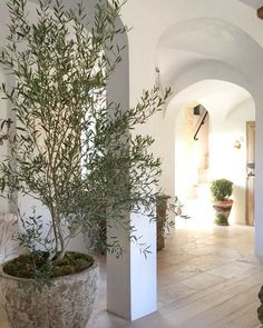 Patina on pot with the olive tree in it. The Stunning and Classic Home of the Giannetti's at Patina Farm Patina Farm, Home Decor Inspiration, Indoor Plants, Interior Design Inspiration, Cheap Home Decor, Stone Planters, Exterior, Classic House, Interior Design Projects