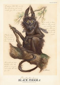 The Phooka (old Irish), (also Pooka, Puka, Phouka, Púka, Pwca in Welsh, Bucca in Cornish, pouque in Dgernesiais, also Glashtyn, Gruagach) is a creature of Celtic origin, notably in Ireland and Wales. It is one of the myriad of faery folk, and, like many faery folk, is both respected and feared by those who believe in it. According to legend, the phooka is an adroit shape changer, capable of assuming a variety of terrifying forms. It may appear as a horse, rabbit, goat, goblin, or dog. No…