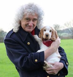 Brian May and Anita Dobson enjoying cuddles with puppies, Ralph (ft. with Brian) and Luke (ft. with Anita), whilst visiting the Buckinghamshire charity, Hearing Dogs for Deaf People. John Deacon, Adam Lambert, Queen Brian May, Queen Meme, Deaf People, Queen Aesthetic, Roger Taylor, Queen Pictures, Greatest Rock Bands