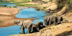 #RuahaNationalPark is famous for full of wildlife especially 3Elephants. Where you like to spend your more time for enjoy the spectacular game viewing.  http://www.globalwidesafaris.com/ruaha-national-park/
