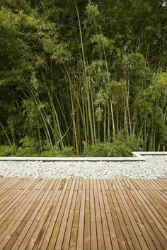 Deck and greenery Olaya House Project Inspiring Serenity: Olaya House Near Medellin, Colombia Bamboo Landscape, Small Yard Landscaping, Contemporary Garden, Garden Features, Garden Pests, Garden Inspiration, Garden Ideas, Beautiful Gardens, Outdoor Gardens