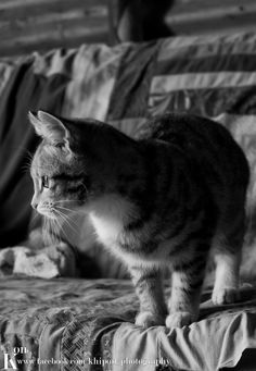Kitty Kit Kat