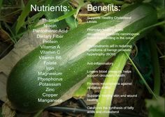 Health benefits of zucchini. I thought I would share this since we have all been reading lots of zucchini :)