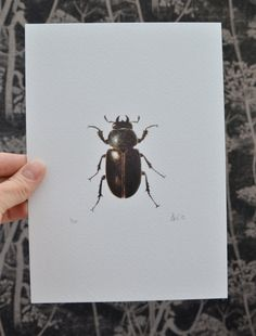 Stag Beetle art print of an original watercolour painting by Ele Grafton on Etsy UK. Black and white art. Insect art.