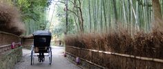 Kyoto's Bamboo Forest