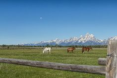 Teton Horses by Jared Perry on 500px