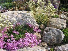 passtende Pflanzen für Ihren Steingarten auswählen