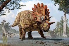 regaliceratops - Google Search