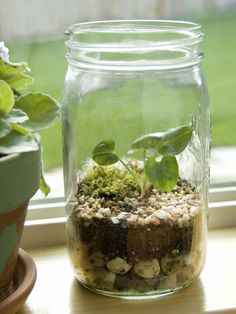 How to Make a Mini Terrarium >> http://www.hgtv.com/gardening/how-to-create-a-terrarium/index.html?soc=pinterest #mothersdaycraft