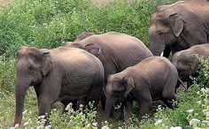 Mesmerizing Bannerghatta Park in Bangalore #wildlife