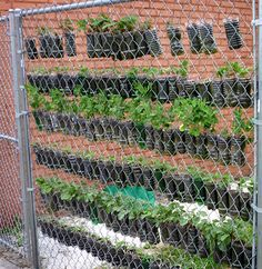 small vertical space garden made from soda bottles