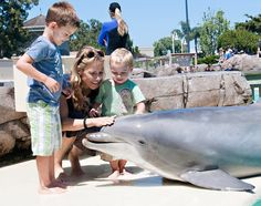 Sheryl Crow and her sons, 5-year-old Wyatt and 2-year-old Levi got up close and personal with a resident of San Diego's SeaWorld – a 22-year-old bottlenose dolphin named Steime.