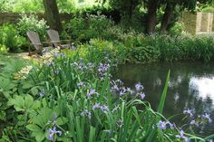I am going to attempt to do this to our pond this year. Not as many plants, though.