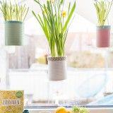 Anleitung für selbstgemachte DIY upcycling Blumenampeln aus Blechdosen in Pastellfarben als Fensterdeko im scandi Look