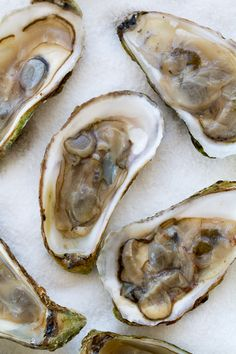 Savory and Decadent Broiled Oyster Recipe Broiled Oysters Recipe, Canned Oysters, Sandwiches, Oyster Recipes, Good Food, Yummy Food, Sunday Suppers, Sea Food, Seafood Dishes