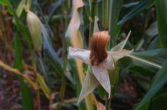 El maiz también forma parte de los alpes
