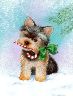 Christmas cards featuring the Yorkshire Terrier Christmas Animals, Christmas Dog, Christmas Cards, Merry Christmas, Chien Yorkshire Terrier, I Love Dogs, Cute Dogs, Top Dog Breeds, Image Digital