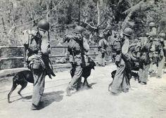 war dogs | Doberman Marine War Dog Devil Dogs at Guam WWII Photo