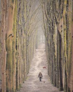 350 vind-ik-leuks, 34 opmerkingen - Boeksz & Fotografie / Peter (@boeksz) op Instagram: 'Het rijtje van Boeksz is vandaag samengesteld door Chris Smallenbroek van@chrissmallenbroek en…' Road Lines, Tree Tunnel, Dog Walking, Pathways, Animal Pictures, Serenity, Trail, Stairs, Country Roads
