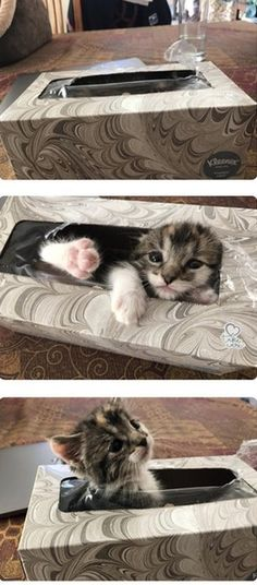 More #Cute Bad #Kittys to Laugh at Right Now.