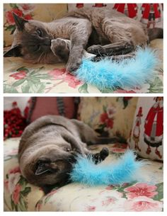 DIY Cat toy -- ok this is perfect! especially with it attached to a dowel rod? that way you can tease it and not lose it so fast!