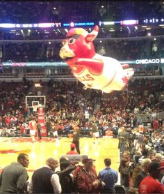 A Bulls Game (COMPLETE)