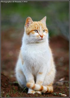 CAT       CAT  Posted by علي الحسين  on 2013-05-02 09:37:40      Tagged:  , CAT  - http://newsyork.gq/cat-19/