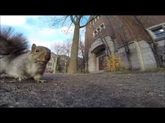 A squirrel nabbed my GoPro and carried it up a tree (and then dropped it) - YouTube