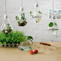 Great ideas are depicted as a light bulb and we think these modern terrariums are a fantastic idea. Just fill with your favourite plants and let them light up your home. - Material: Glass - Size: in x 5 in Light Bulb Art, Light Bulb Crafts, Terrarium Containers, Hanging Vases, Affordable Home Decor, Diy Arts And Crafts, Vases Decor, Flower Vases, Flower Diy
