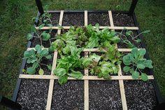 Square foot gardening method
