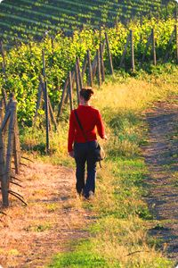 Hiking through the vineyards